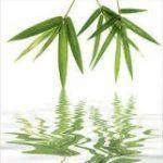 Триптих Восточный бамбук 30х90